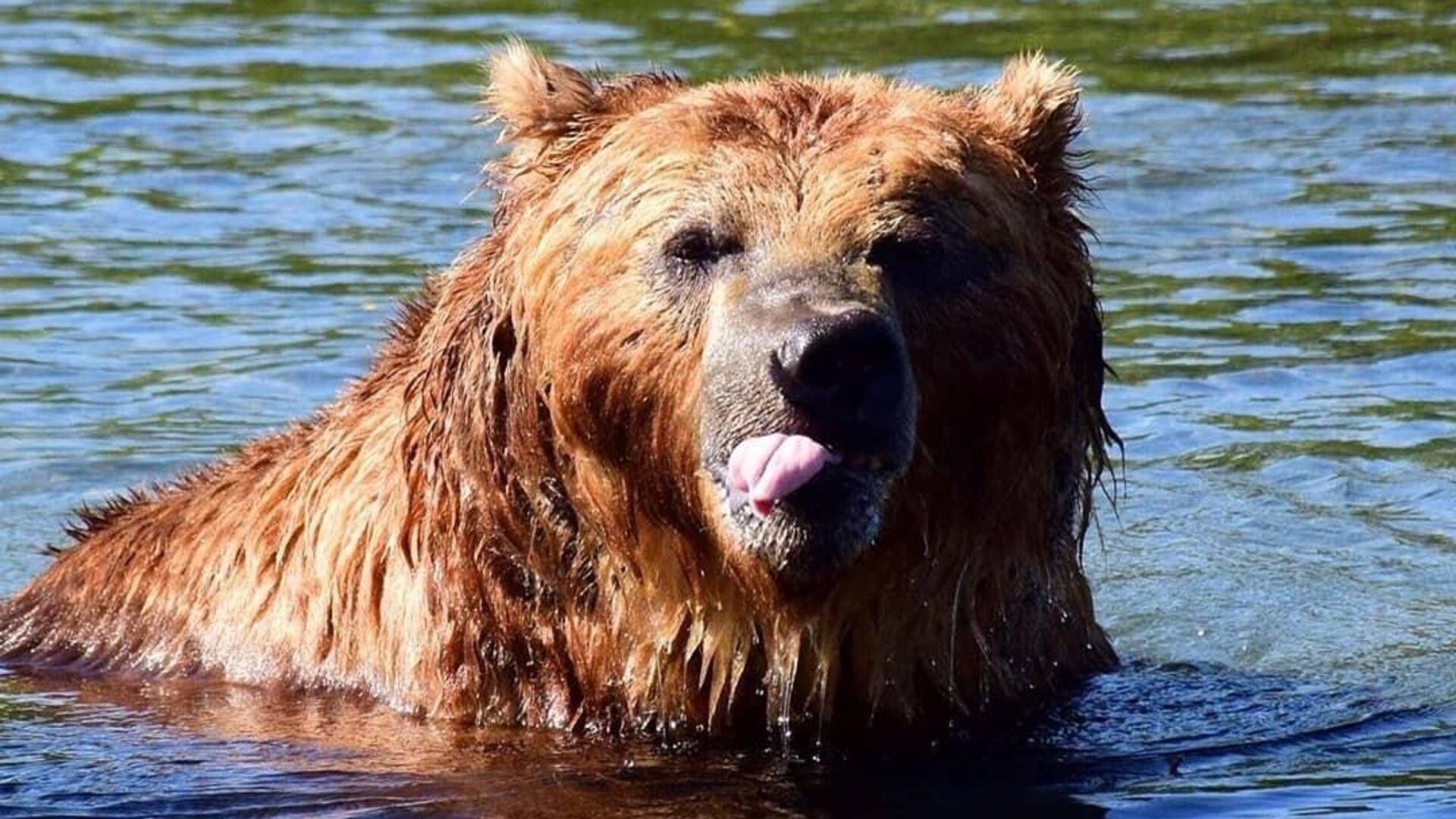 В Мытищах ищут медведя, сбежавшего из частного гольф-клуба