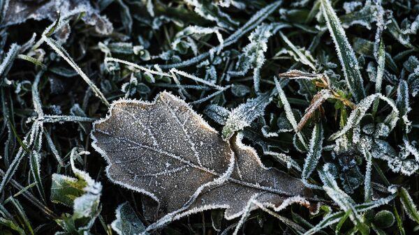 Дубовый лист на траве во время утренних заморозков