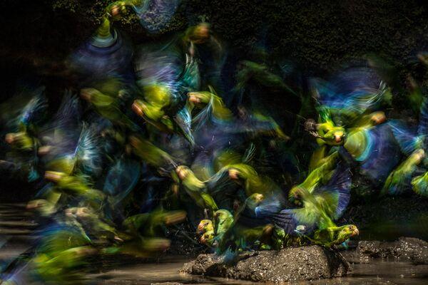 Работа фотографа Liron Gertsman, занявшая третье место в категории Птицы в полете в фотоконкурсе Bird Photographer of the Year 2019