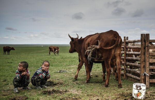 Дети наблюдают как коровы пасутся в Монголии