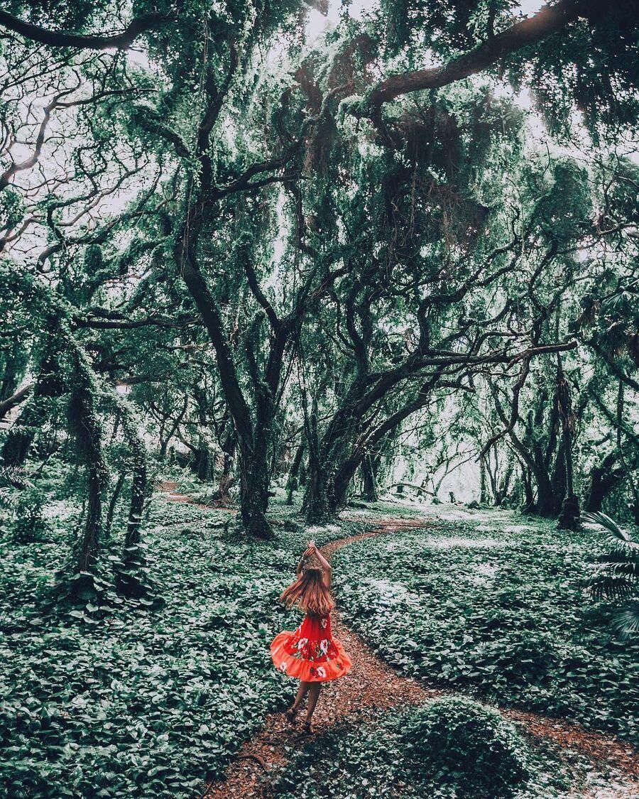 Тропический лес, Гавайи
