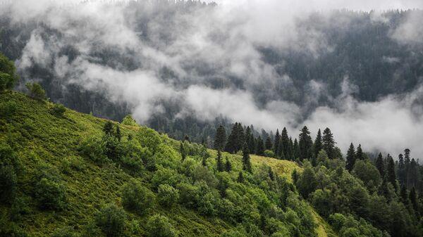 Вид из кабины канатной дороги на склоны гор, поросшие лесом, на горном курорте Роза хутор в Красной поляне