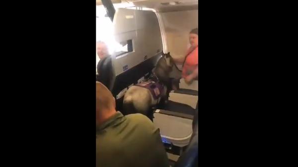 Женщина на борту самолета с пони