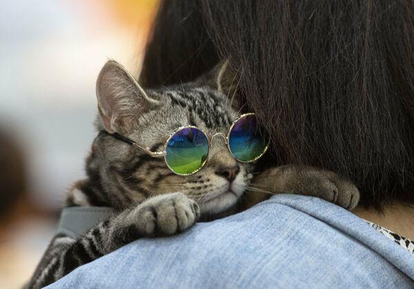 Хозяйка несет кота в солнцезащитных очках на выставке Pet Expo Championship в Бангкоке