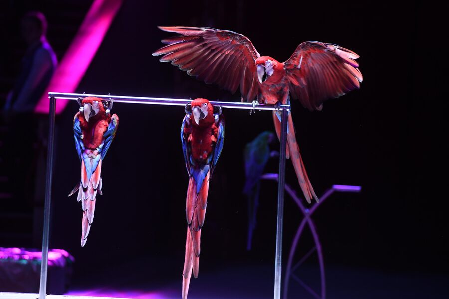 Всемирный фестиваль циркового искусства Идол