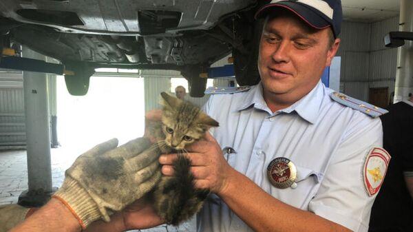 Бездомный котенок спасен из-под капота автомобиля роты ДПС ОГИБДД ОМВД России по Ставропольскому району Самарской области