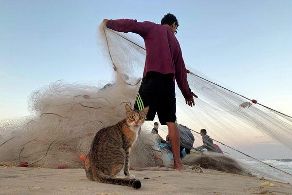 Кошка возле палестинского рыбака на пляже в северной части Сектора Газа