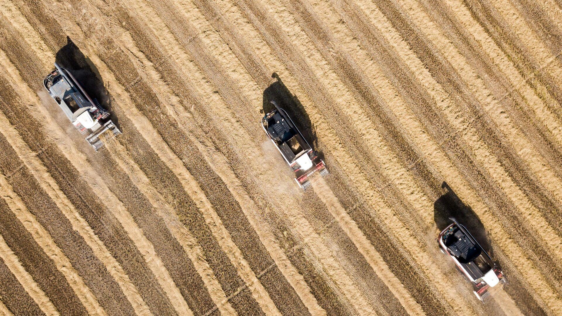 Уборка урожая риса в Краснодарском крае - РИА Новости, 1920, 10.02.2021