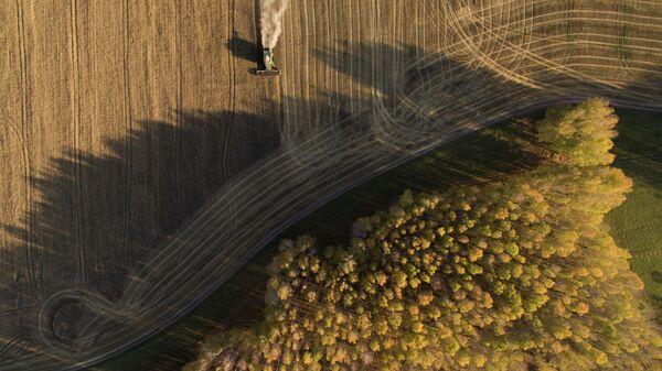 Уборка пшеницы в Новосибирской области