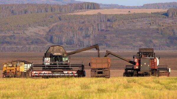 Комбайны засыпают зерно в грузовик во время уборки урожая рапса в Красноярском крае