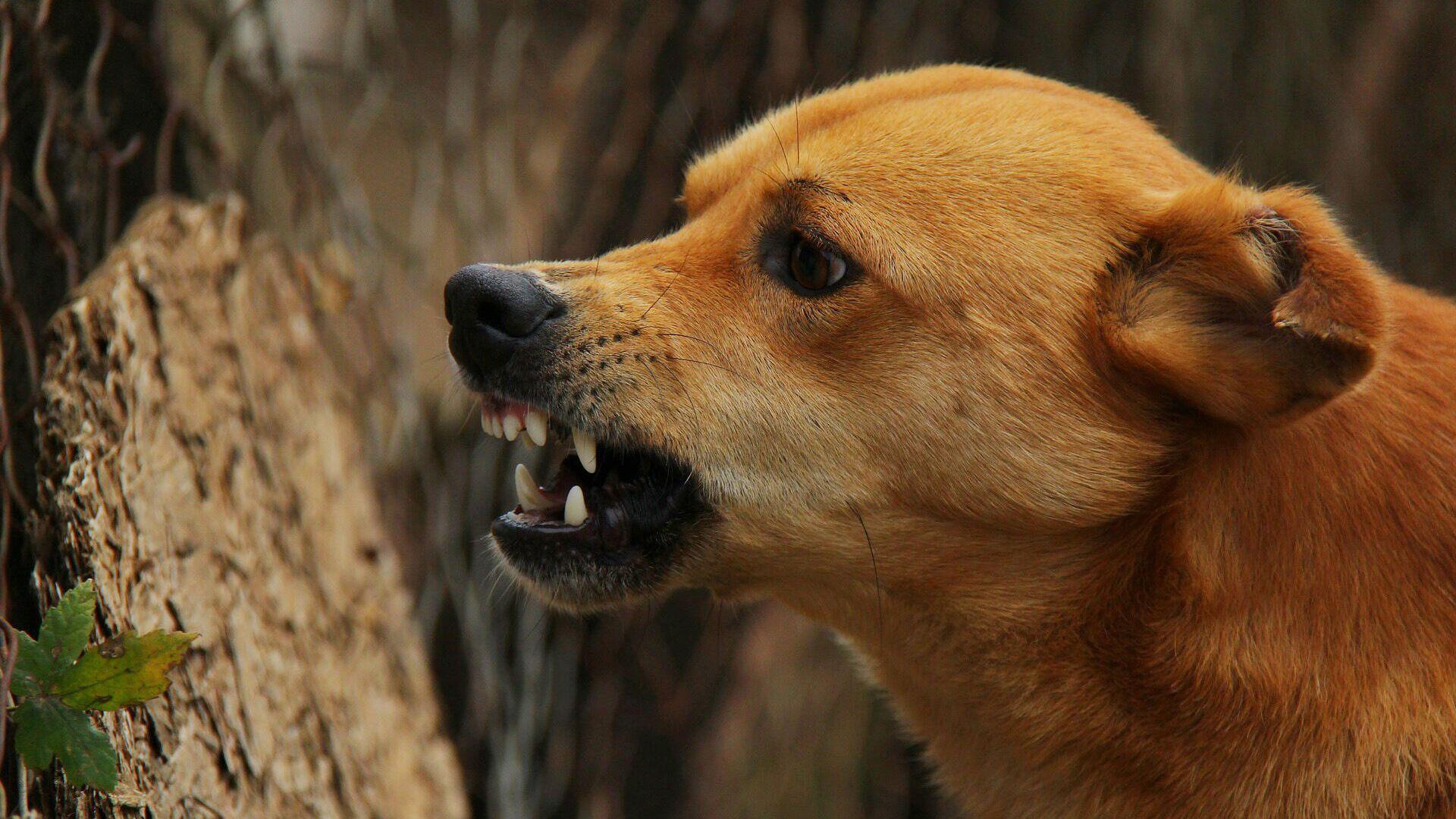 Злая собака - РИА Новости, 1920, 26.02.2021