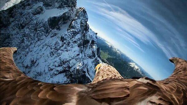 С камерой на крыльях: полет орлана над Альпами