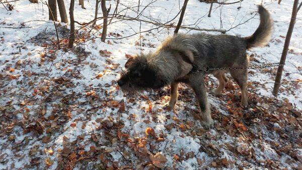 Собака, спасенная сотрудниками Шарташского парка в Екатеринбурге