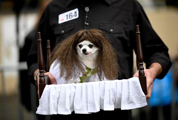 Ежегодный Хэллоуин-парад собак в Нью-Йорке