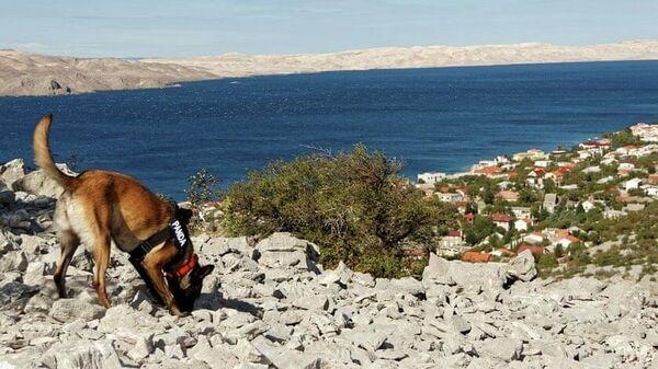 Собака на археологических раскопках в Хорватии