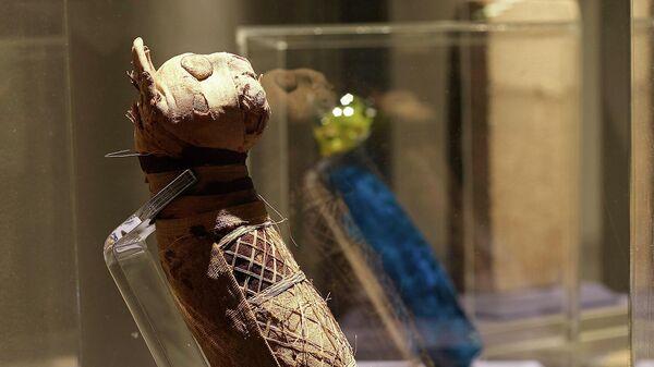 Мумия кошки в Музее изобразительных искусств в Ренне, Франция