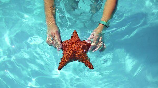 Доминикана. Морская звезда в руках туриста у острова Саона