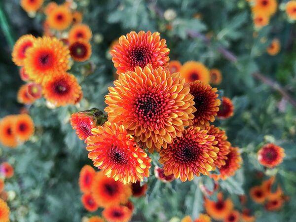 Крым. Цветы в Никитском ботаническом саду