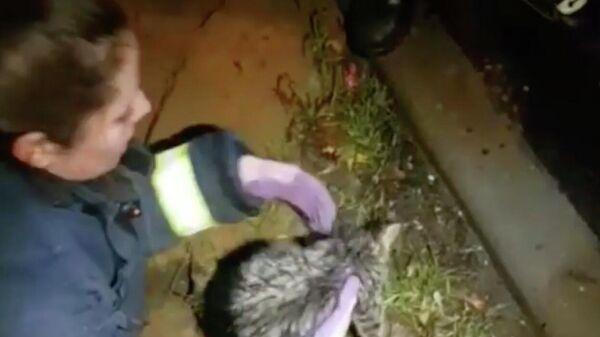 Сотрудники добровольной организации СпасРезерв во время спасения котенка из отверстия столба