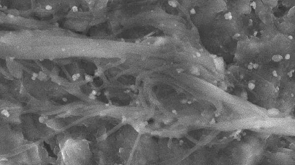 Расширенный участок мицелия гриба, найденного на территории Якутии