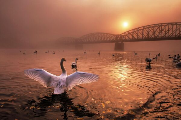 Peter Cech. Работа победителя конкурса Nature Photographer of The Year 2019