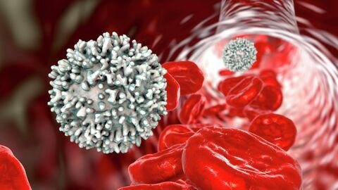 Лимфоцит в кровеносном сосуде