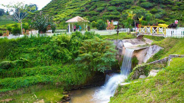 Чайная плантация Камерон-Хайлендс в Малайзии