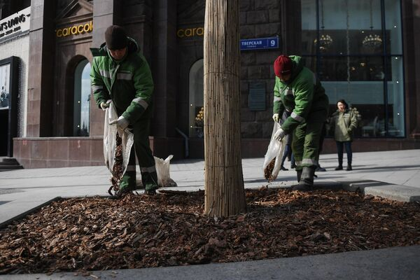 Работники коммунальной службы меняют щепу на клумбе у дерева на Тверской улице в Москве
