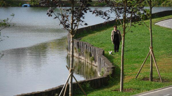 Деревья, высаженные около Удальцовских прудов в Москве