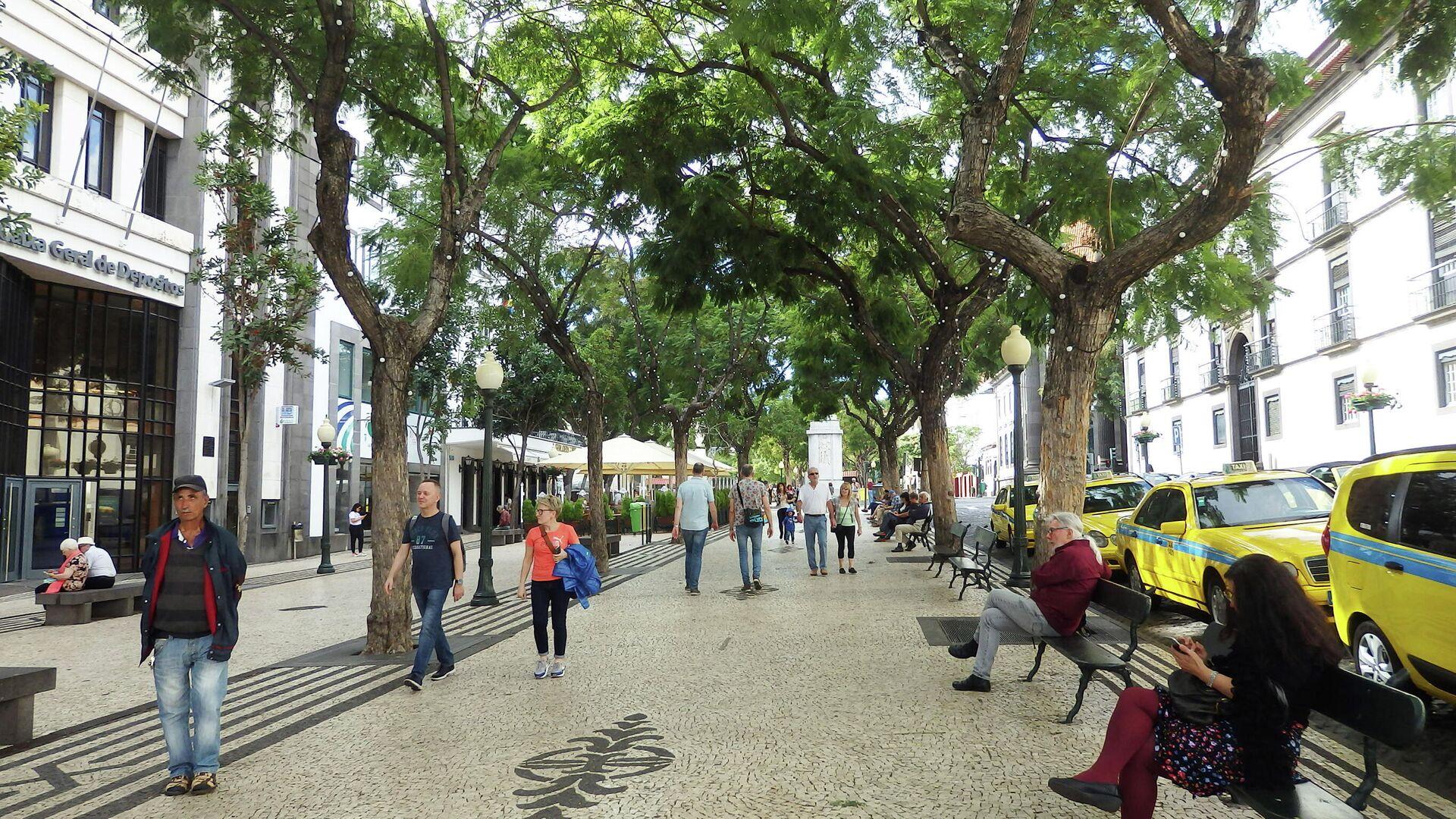 Власти Мадейры планируют чипировать деревья в городах