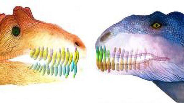 Так в представлении художника выглядели обновляющиеся зубы майюнгазавра