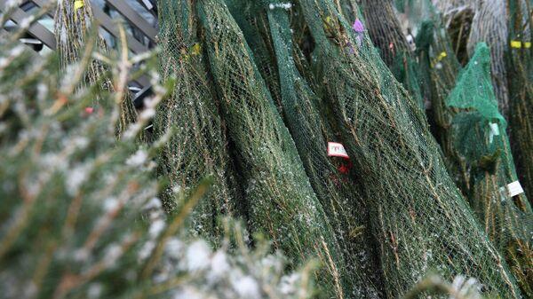 Продажа новогодних елок на одном из елочных базаров