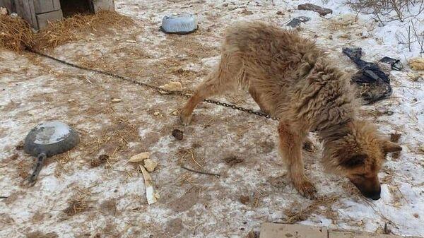 Пес в камышловском приюте