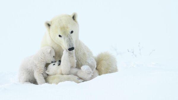 Steve Levi. Шортлист Wildlife Photographer of the Year LUMIX People's Choice Award