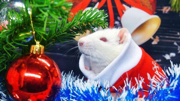 Крыса по кличке Пухляш под новогодней елкой