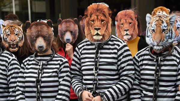 Активисты в масках животных во время протеста против использования животных в цирках