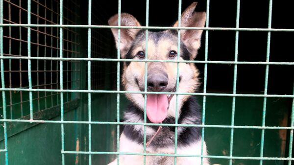 Собака в вольере на территории приюта для бездомных животных