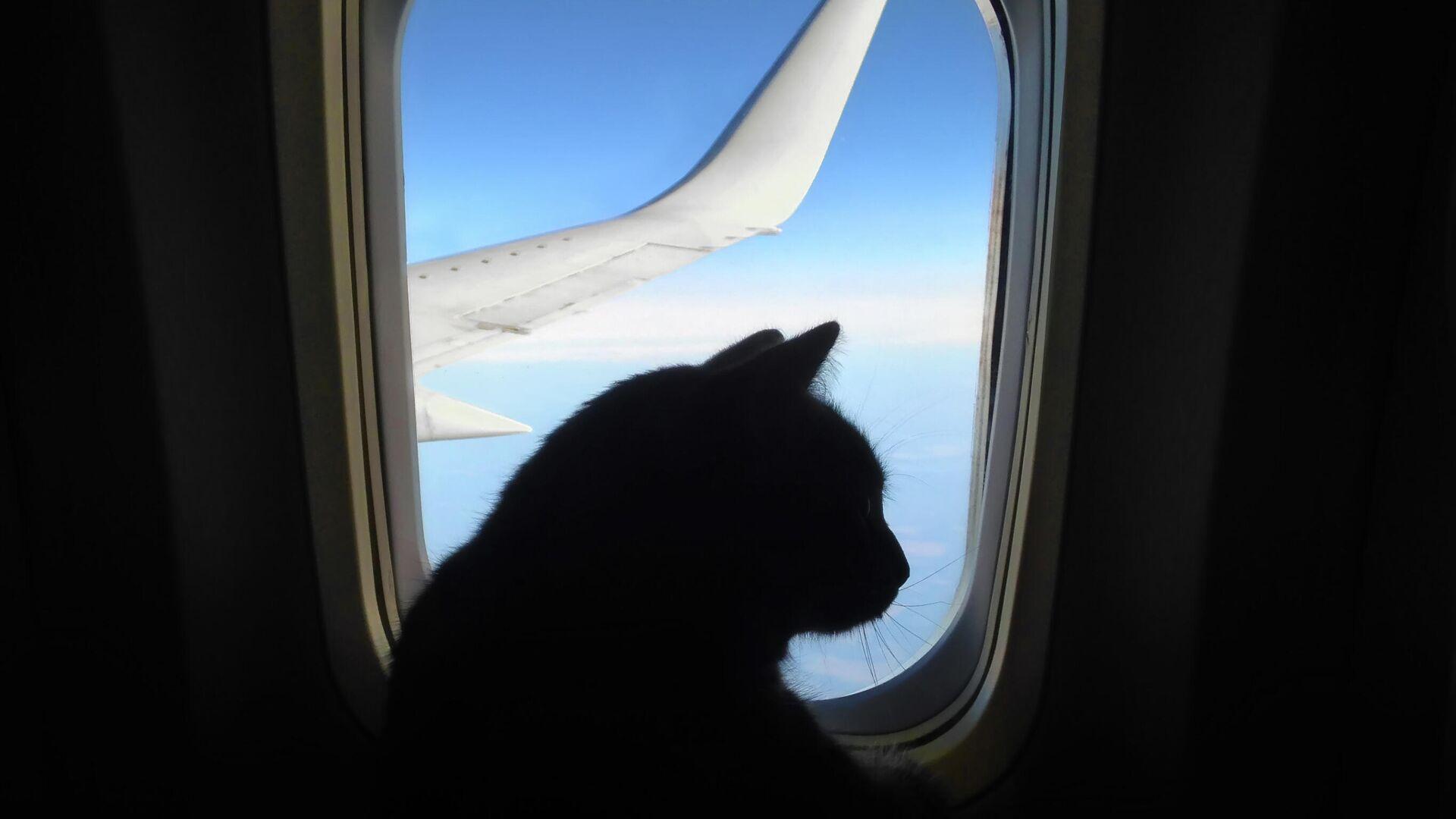 """1562453593 0:256:2731:1792 1920x0 80 0 0 71426df3b7078200da90b5c1bb0f34f4 - Пассажиры авиакомпании """"ЮТэйр"""" смогут перевозить животных на соседнем кресле"""