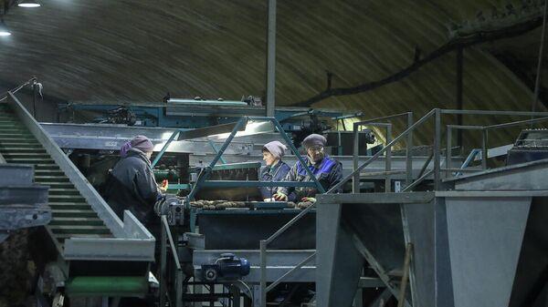 Рабочие на заводе по производству картофельного крахмала в селе Оленевка Пензенского района