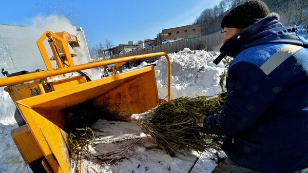 Утилизация новогодних елок