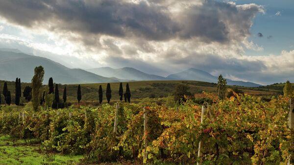 Виноградники в окрестностях Алушты в Крыму