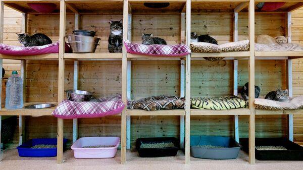 Кошки в вольере на территории приюта для бездомных животных