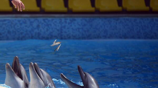 Почему россияне против дельфинариев и океанариумов