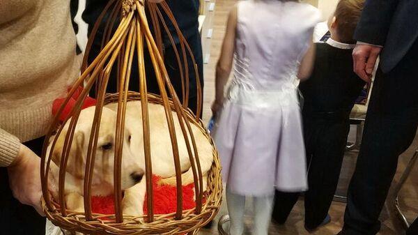 Семья Папановых получила подарок от имени Президента РФ - щенка золотистого ретривера