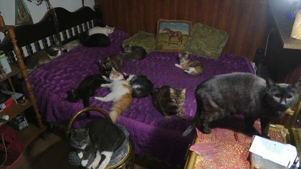 Художница приютила около 80 бездомных животных