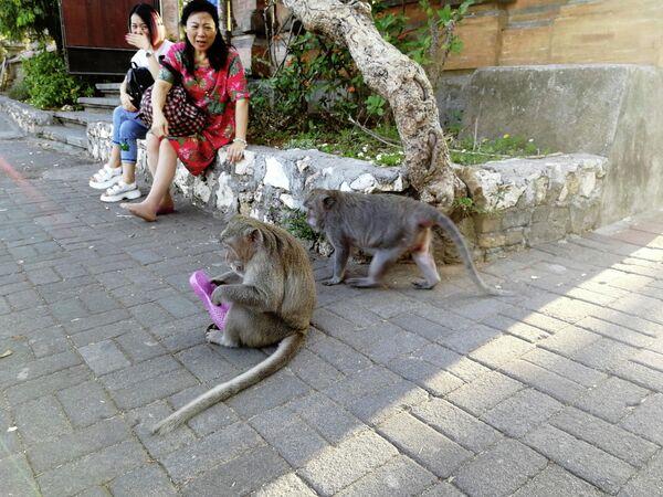 Бали. Обезьяна отобрала обувь у туристок у храма Улувату