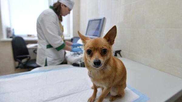 Собака перед осмотром в Челябинской ветеринарной станции