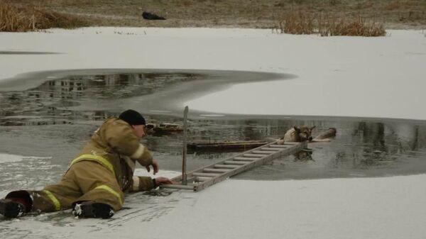 Спасатели под Белгородом извлекли из воды упавшую в полынью на середине реки собаку. 21 января 2020