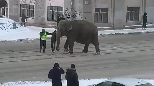 Слониха на улице Екатеринбурга