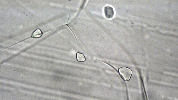 Кристаллические включения гидратов воздуха в древнем льду